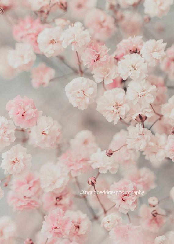 Wallpaper of pink flowers