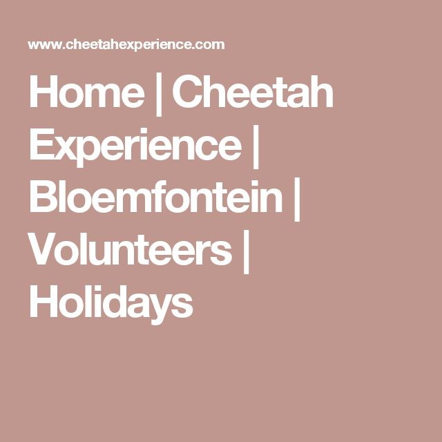 Home | Cheetah Experience | Bloemfontein | Volunteers | Holidays