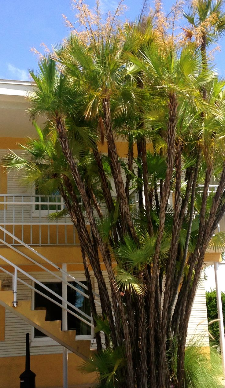 207 best palm trees of the world images on Pinterest ...