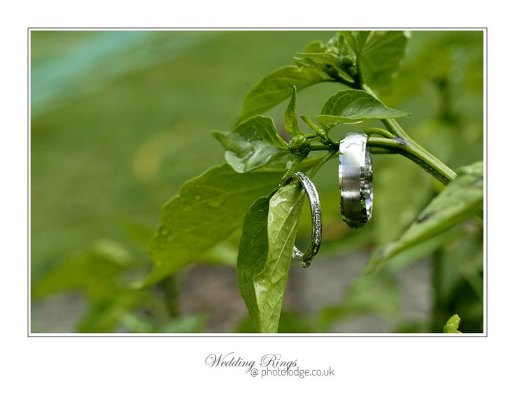 Wedding Rings 12