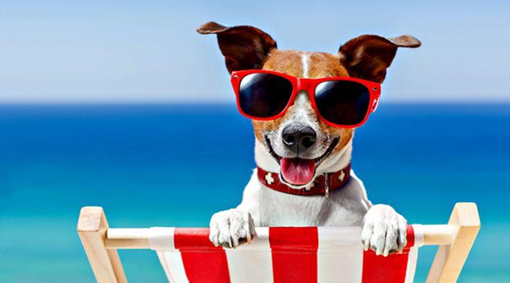 Classifique este artigo Férias: Pet feliz Dono feliz - se o seu animal de estimação
