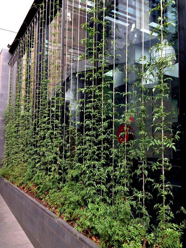 21 Inspirational How To Build A Trellis Screen With Images Vertical Garden Urban Garden Front Garden