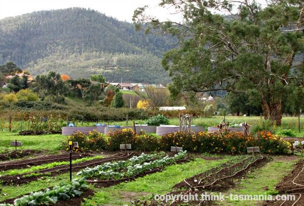 Community Garden, New Norfolk. Article and photo for www.think-tasmania.com