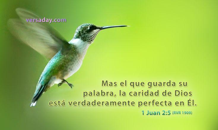 1 Juan 2:5 - Versiculo para Febrero 18