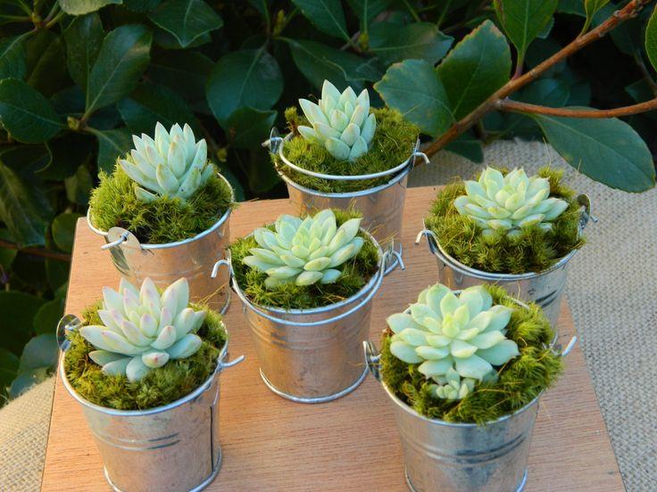 Succulent Wedding Favor, Succulent Bridal Shower Favor, Rustic Wedding Favor, Mini Succulent Plant Favors, Mini Silver Pails With Succulent. $36.00, via Etsy.