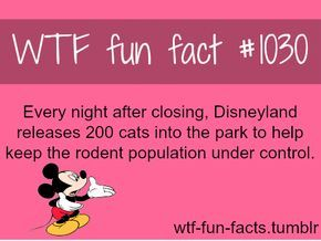 Disneyland cats army MORE OF WTF-FUN-FACTS are coming HERE funny and weird facts ONLY