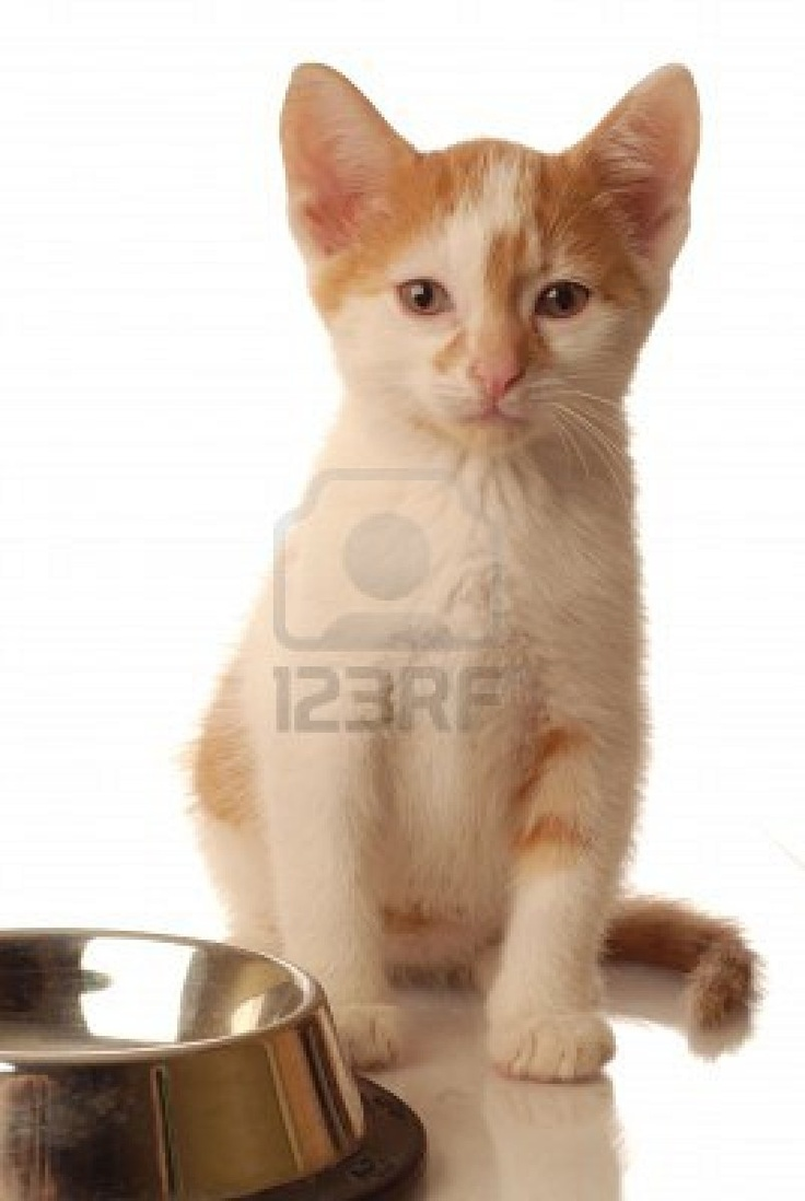 Kitten sitting beside an empty bowl of food.