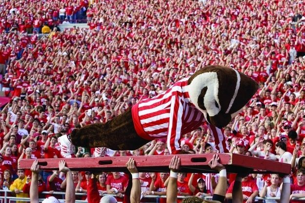 40 Signs You Went To The University Of Wisconsin-Madison: #11 You've Watched Bucky Complete Almost 100 Pushups in a Row