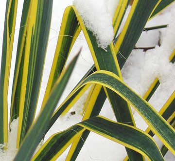 Winter Landscape Tips From The Test Garden