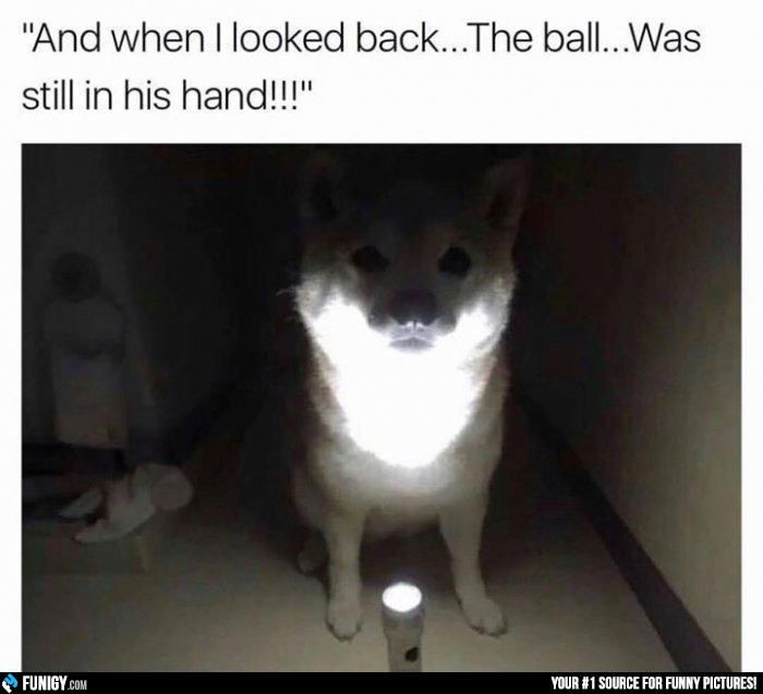 And when I looked back.. The ball was still in his hand! (Funny Animal Pictures) - #ball #dog #hand