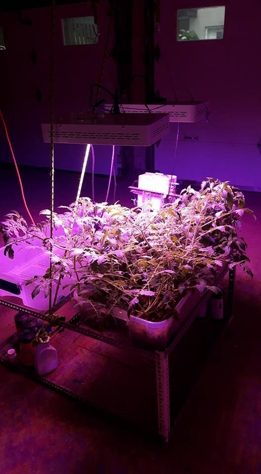 Best Led Grow Light For Tomatoes Best Led Grow Lights