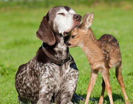 Prieteni adevarati Peisaje cu animale