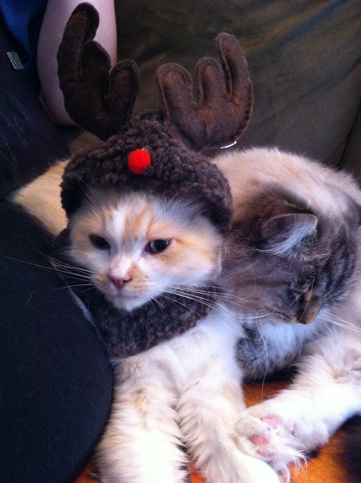 Our red mink reindeer-muffin.