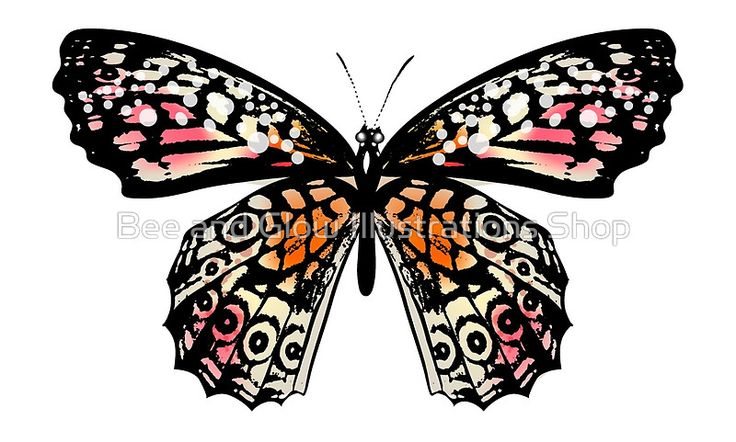 Stunning butterfly Edition