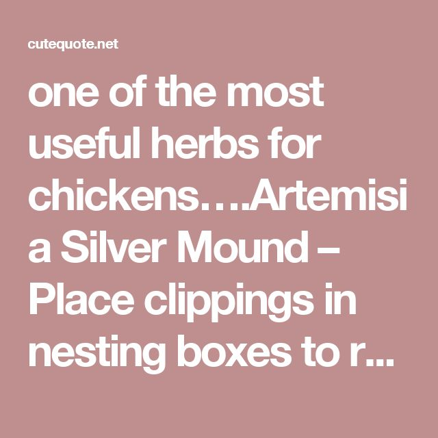 one of the most useful herbs for chickens….Artemisia Silver Mound – Place clippings in nesting boxes to repel poultry lice mites naturally April 4, 2014 by admin one of the most useful herbs for chickens….Artemisia Silver Mound – Place clippings in nesting boxes to repel poultry lice mites naturally  Posted in: Gardening   Recent Posts  Bzzz Honey – Porta vasetti di miele a forma di alveare #packaging #design #pack #product #inspitation #honey #vase Early July is an excellent time to collect…