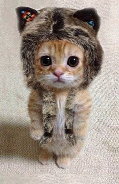 Thank you to everyone who sent me a nice comment to make me smile. I feel a lot better an I am flying through all my homework. Here's a cute kitten for you!!!! <3