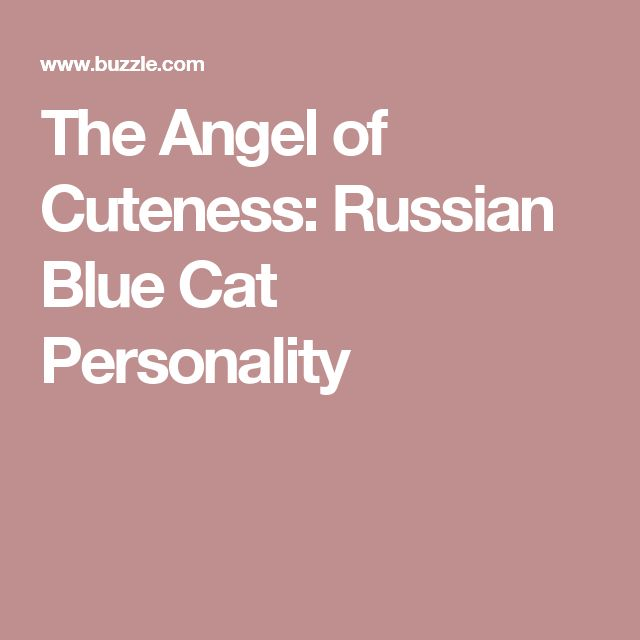 The Angel of Cuteness: Russian Blue Cat Personality