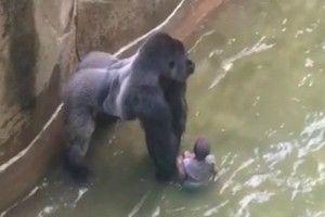 Gorila en vía de extinción o niño de 4 años ¿A quién salvar? - Blog de BabyCenter