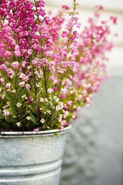 Sweet flowers in a bucket.