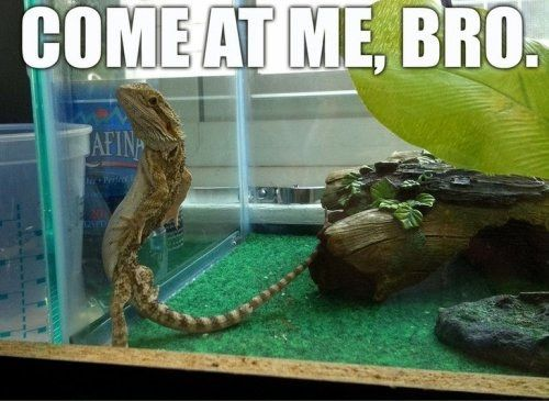 Funny Come At Me Bro Animals (18 pics)