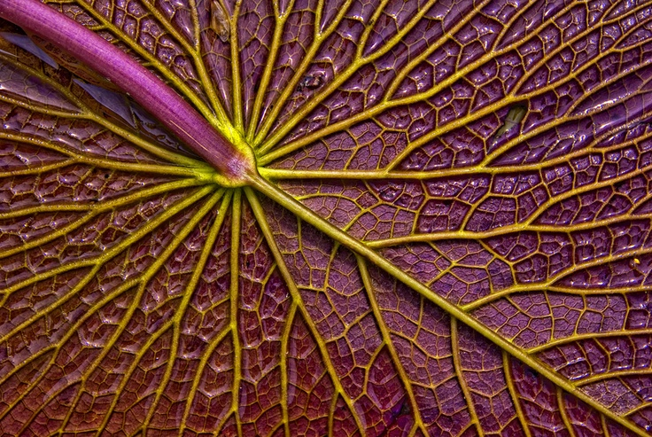 abstract close-up | Photography | Pinterest | Photography ...