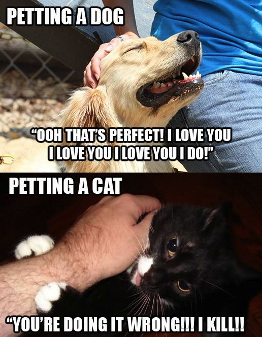 Humor Train - Funny Pictures, Pic Dumps, Animals and GIFs.: Funny