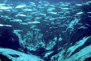 Silver Glen Springs underwater view of pool
