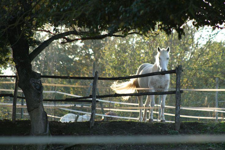 i cavalli all'Agriturismo Poggiolo
