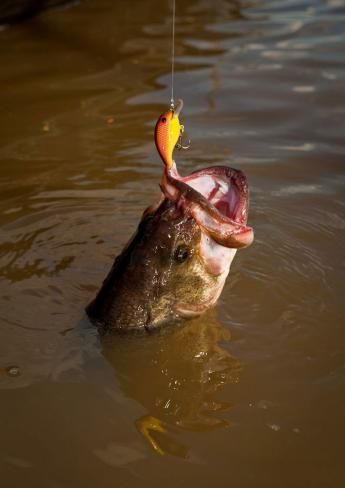 Why Crankbaits are the Best Lure for Fall Largemouth Bass | Field & Stream