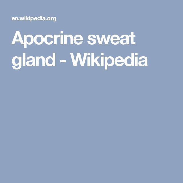 Apocrine sweat gland - Wikipedia
