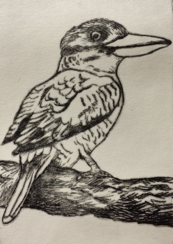 Blue-winged kookaburra Dry point etching Mandy Tootell; Katherine, NT Australia