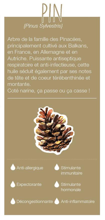 Arbre de la famille des Pinacées, cultivé dans les Balkans, en France, en Allemagne et en Autriche. Son odeur a des notes de tête, de cœur,odeur térébenthinée et montante. C'est un puissant antiseptique respiratoire et anti-infectieux.