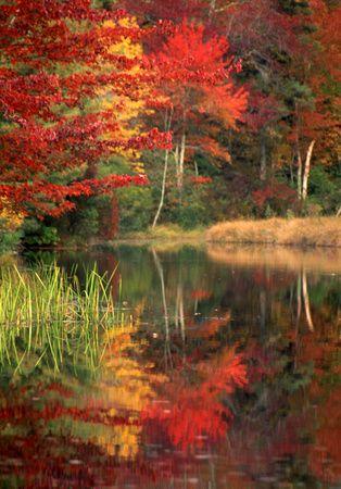 New England Cape Cod fall foliage. Wareham, MA pond during peak autumn day.