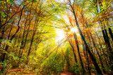 Photo: Herbstlicher Wald
