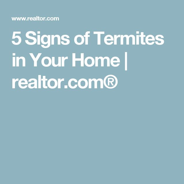 5 Signs of Termites in Your Home | realtor.com®