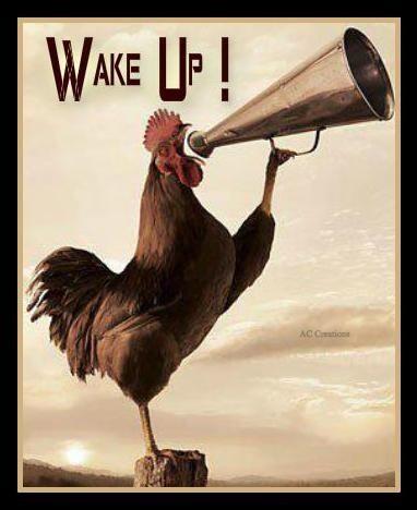 Sveglia!!