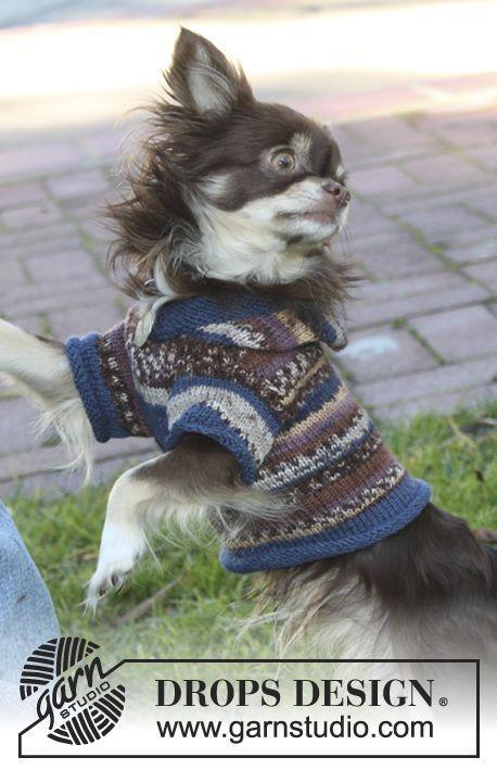 Gestrickter Drops Hundepulli Mit Kapuze In Fabel Kostenlose