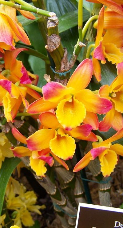 Orchids. Wow, these are beautiful but hard to grow in all climates, I understand.
