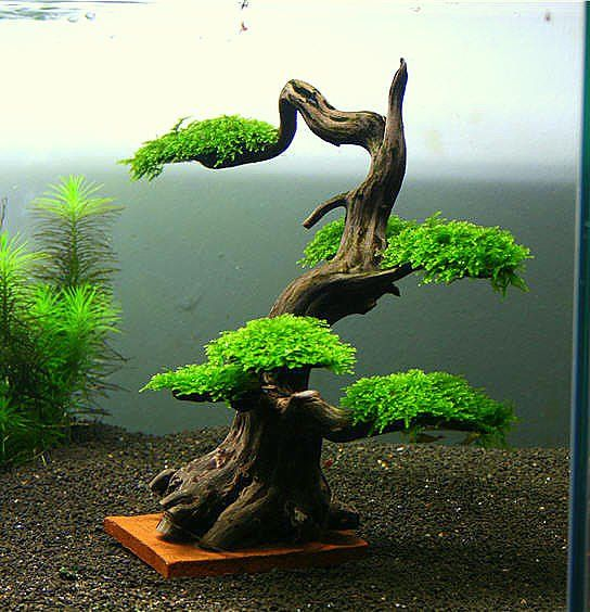 Bonsai in water.