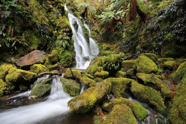 awildland: Corker of a Walk - Barrington Tops National Park