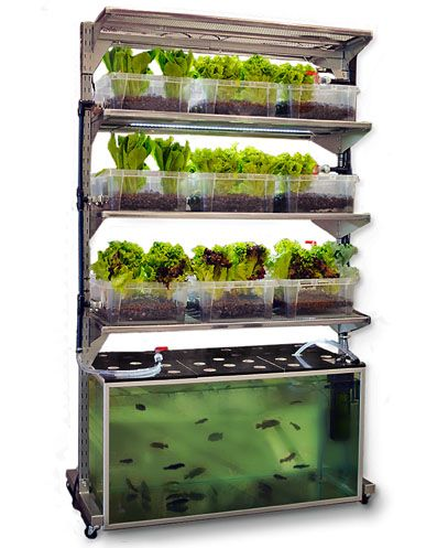 """DIY IKEA Shelf In-Home Aquaponics: Dubbed """"Malthus,"""" this Ikea-hacked project by Conceptual Devices pieces together a 100g fish tank, plastic grow beds, a pump and piping onto an IKEA Broder shelf, with wheels. Malthus is designed to be an in-home unit, and to grow one meal a day, a portion of fish with a side of salad ~ Tutorial with 3 nicely-drawn diagrams"""