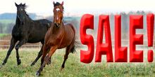 800+ items are ON SALE NOW at ChickSaddlery.com ~ Closeouts, clearance, horse tack & equipment, riding clothes, and more!