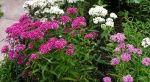 Цветы. Саженцы. Семена Цветов (страница 1)  : фотографии Цветы / макро