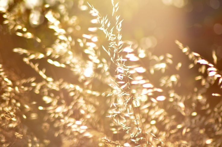 Sunny cobs! #nature #sunny #summer #cobs #abstract