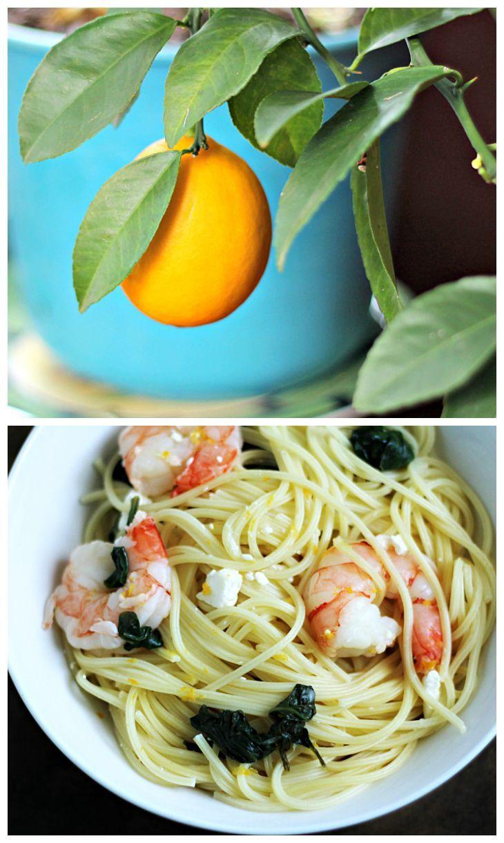 ... Shrimp Co. on Pinterest | Shrimp, Shrimp pasta and Garlic shrimp
