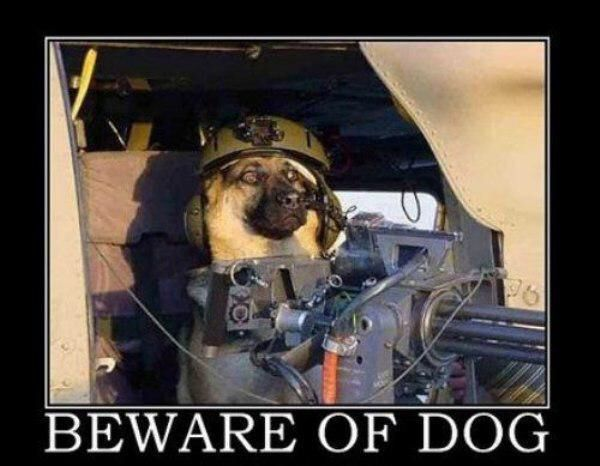 Funny Pics Of Dogs With Guns 31 best images about D...