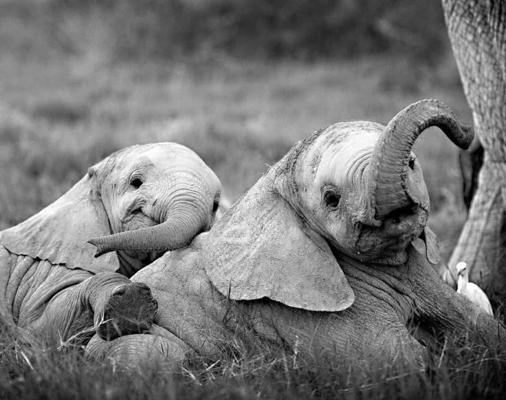 Does anyone else find baby elephant smiles as soothing as we do?!?  Picture by the phenomenally talented Mark Drury​​...