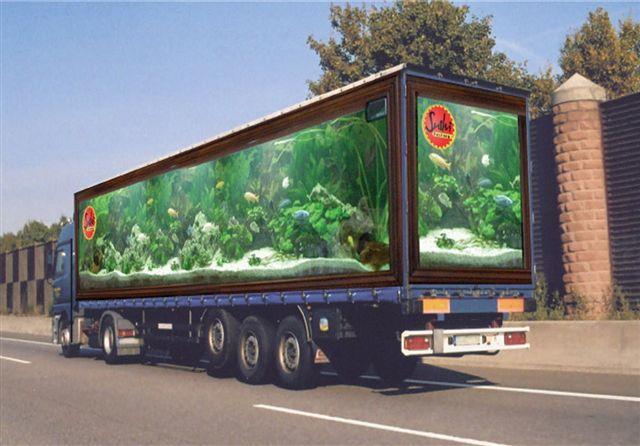 hauling fish