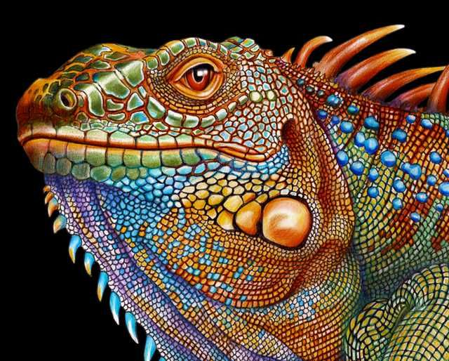 The Iguana And Chameleon Color Pencil 11 X 17 Post Animal Drawings Color Pencil Drawing Realistic Drawings