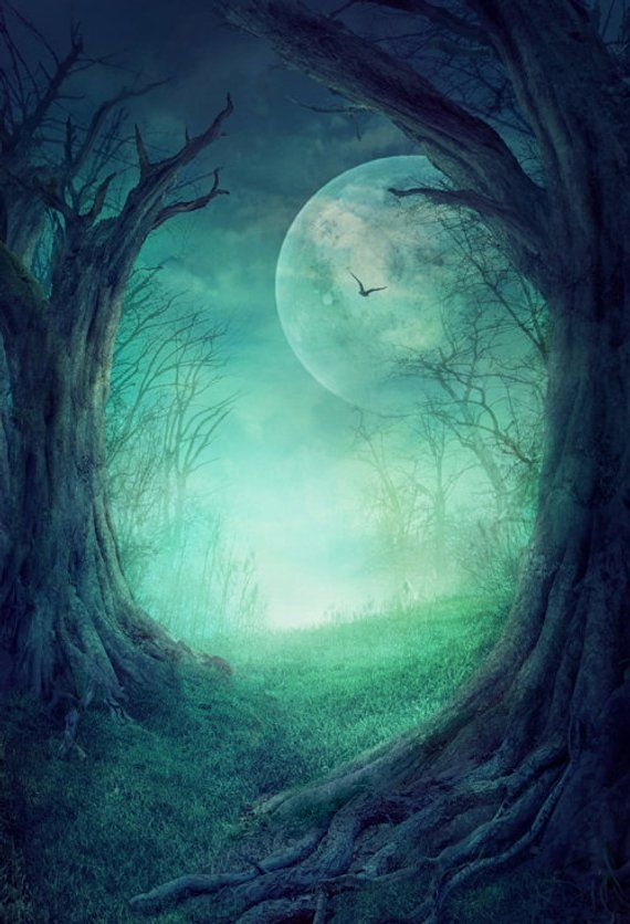 Enchanted Deep Forest Photography Backdrop Fantasy Tree